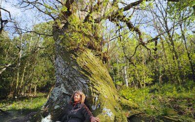 Sylvothérapie – Bain de forêt le 24 septembre